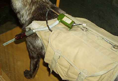 A display of a dog with a backpack mine. It was expected to pull the cord next to its mouth and drop the bomb before returning to its handler.