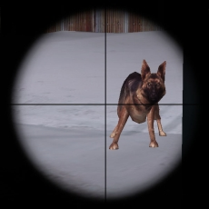 A dog observes Lt. Mike Powell through a window in the Trondheim naval base.